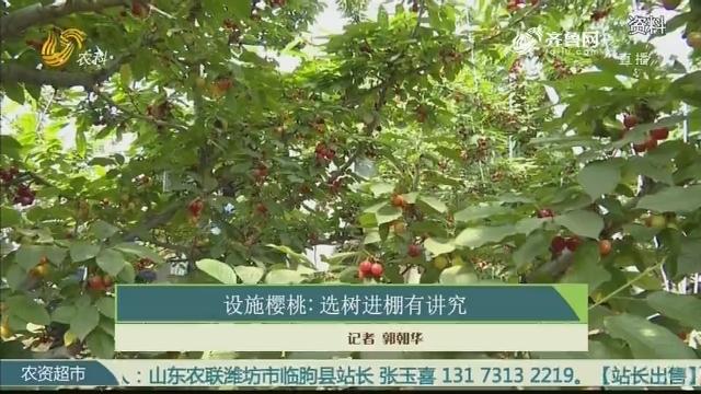 设施樱桃:选树进棚有讲究