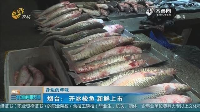 【身边的年味】烟台:开冰梭鱼 新鲜上市