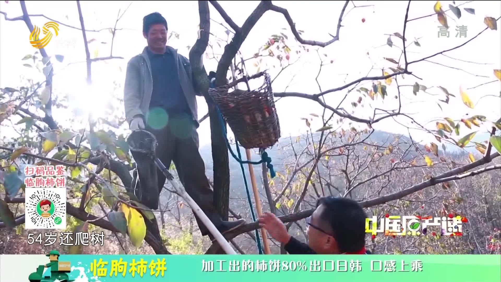 20210124《中国原产递》:临朐柿饼