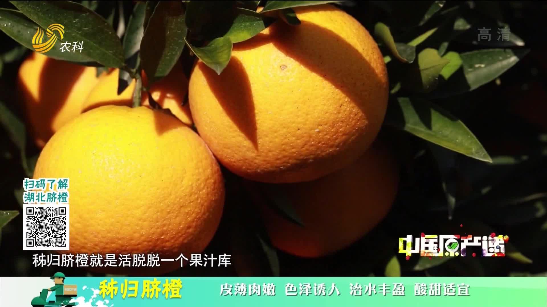 20210127《中国原产递》:秭归脐橙