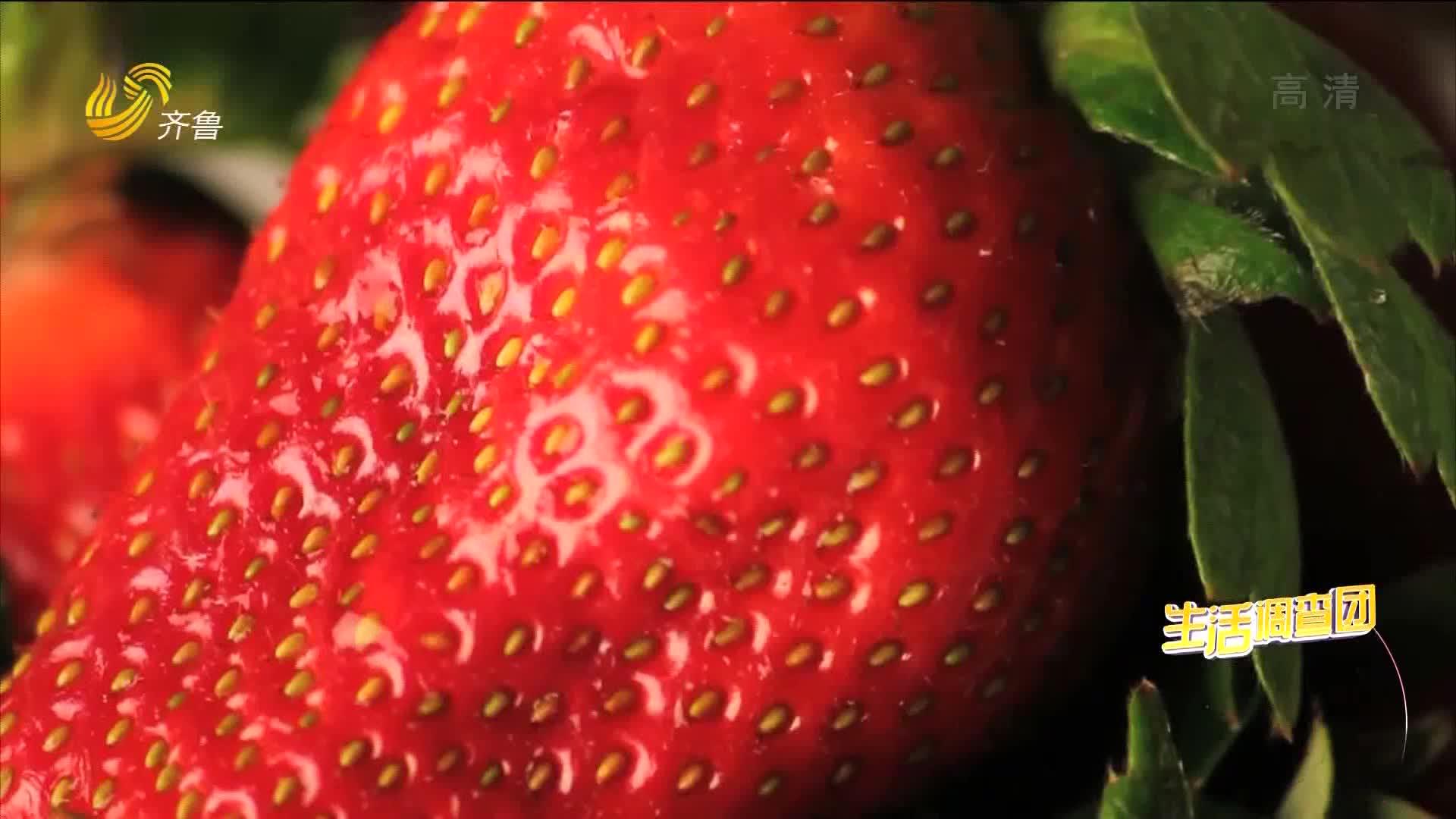 2021年01月29日《生活大调查》:大草莓是打了膨大剂?