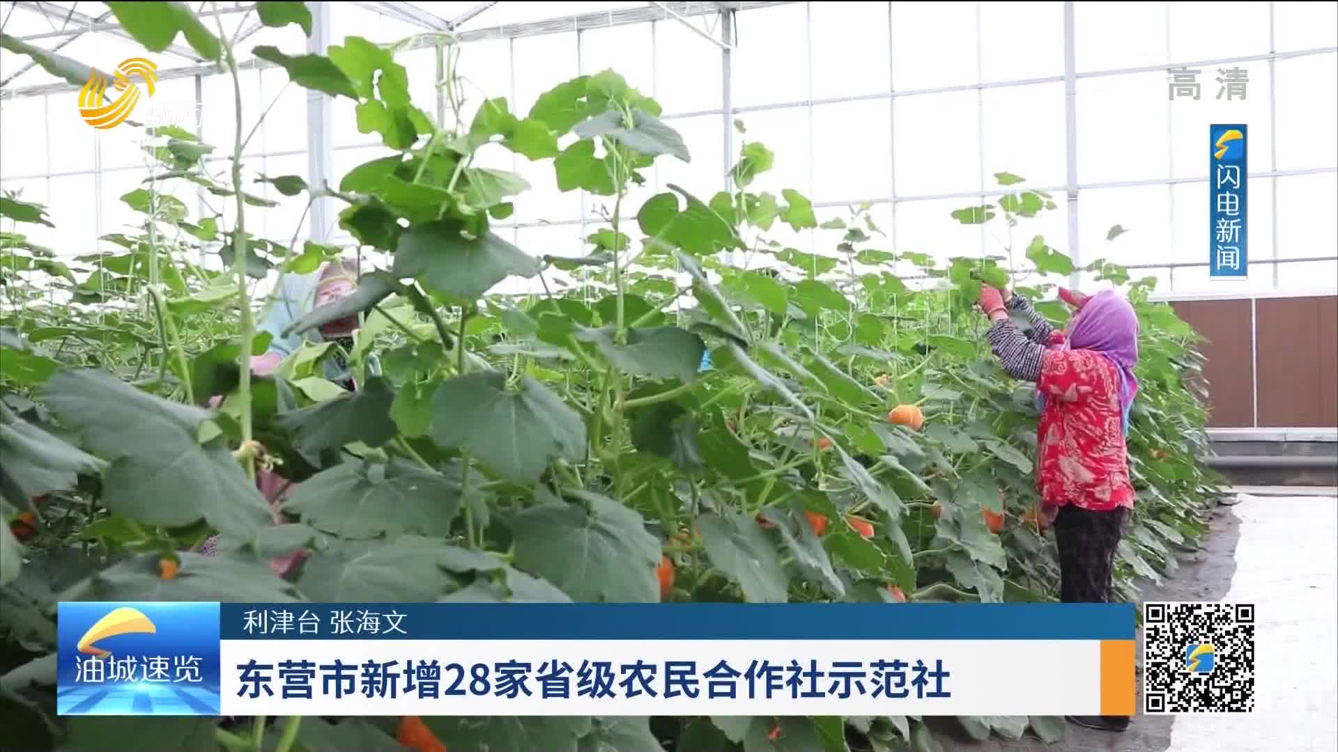 东营市新增28家省级农村合作社示范社