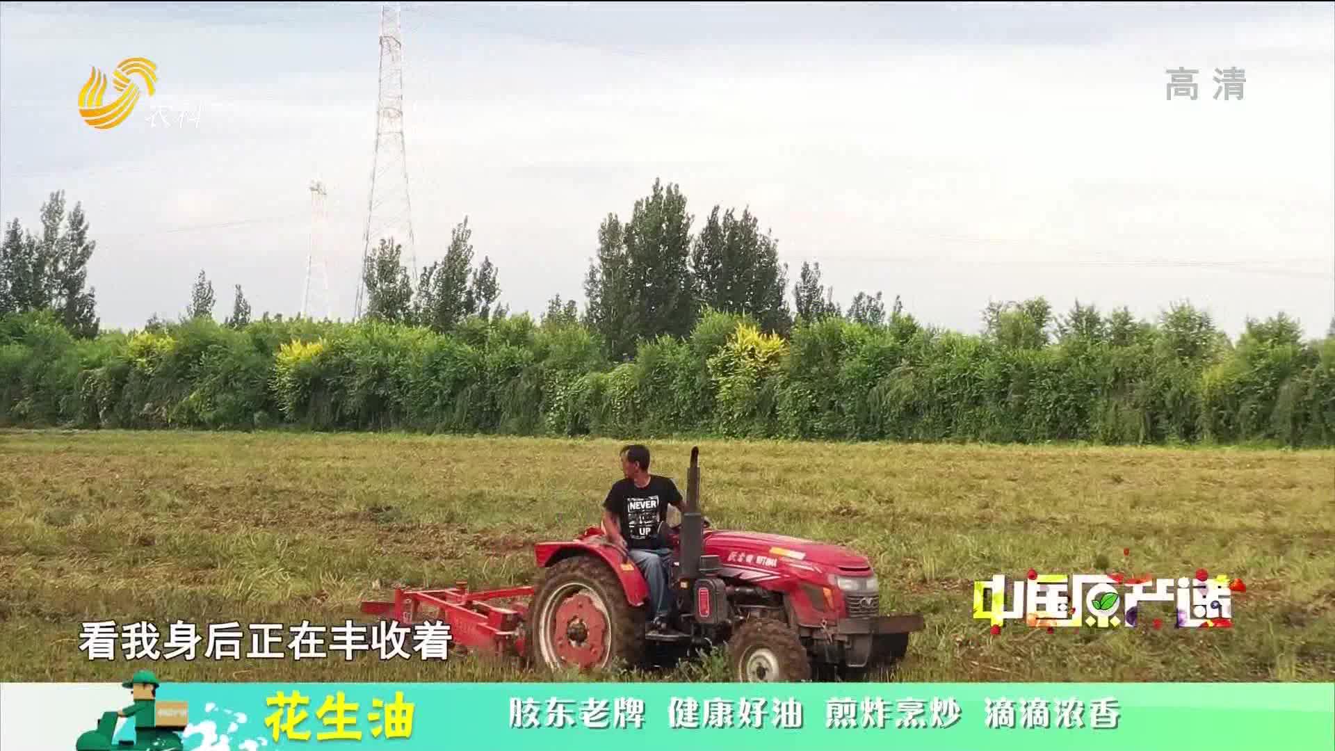 20210131《中国原产递》:花生油