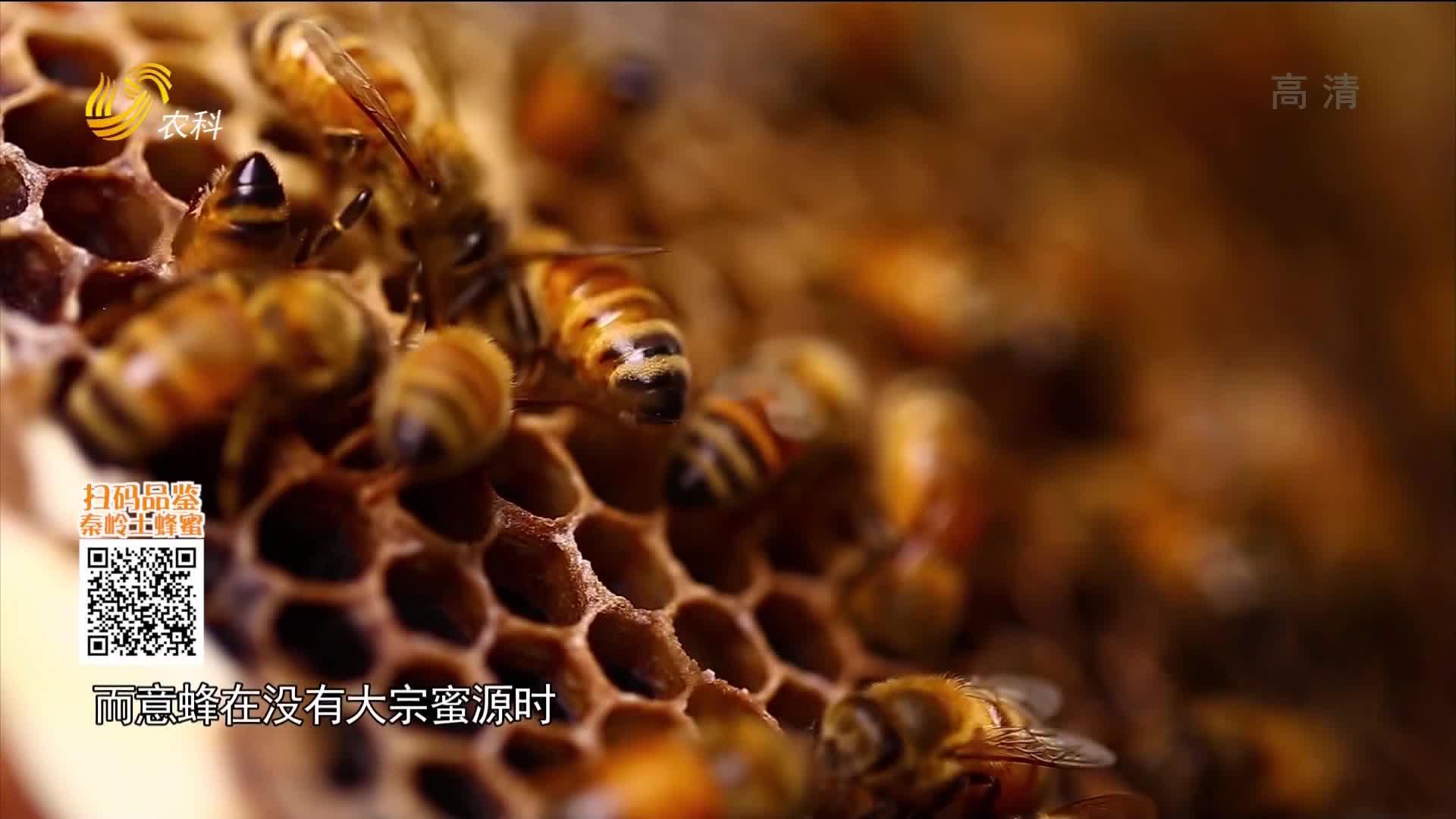 20210201《中国原产递》:土蜂蜜