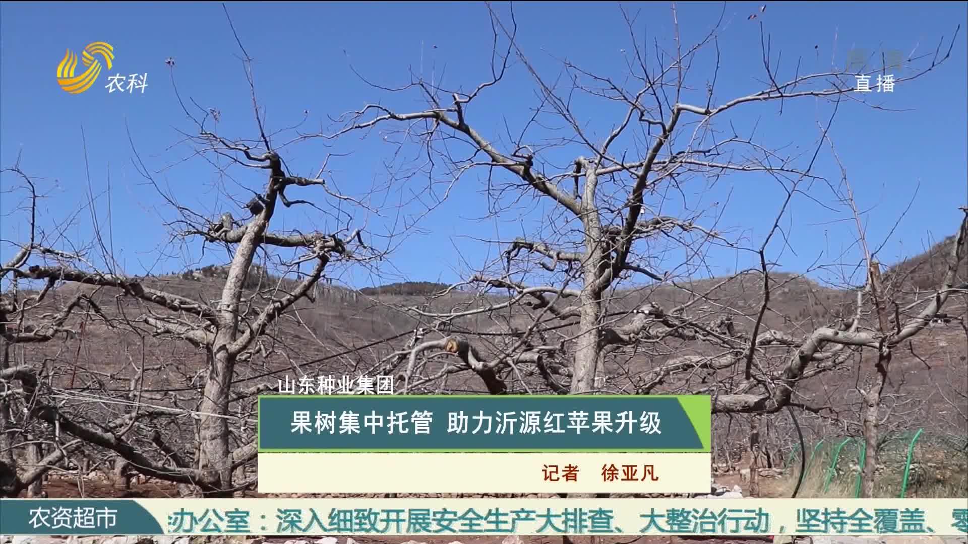 【山东种业集团】果树集中托管 助力沂源红苹果升级