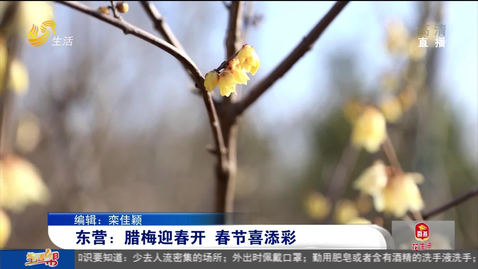 东营:腊梅迎春开 春节喜添彩