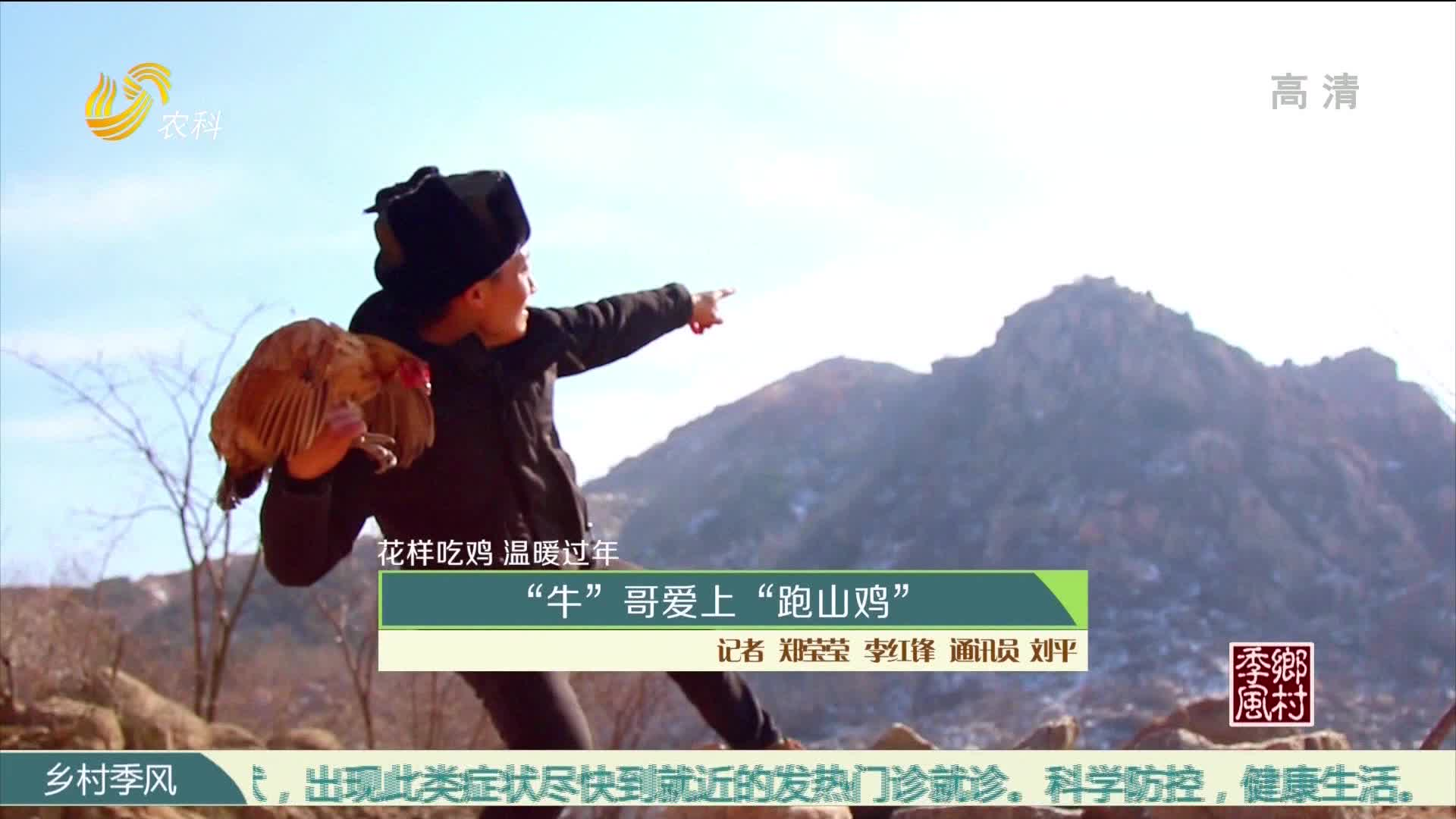 """【花样吃鸡 温暖过年】""""牛""""哥爱上""""跑山鸡"""""""