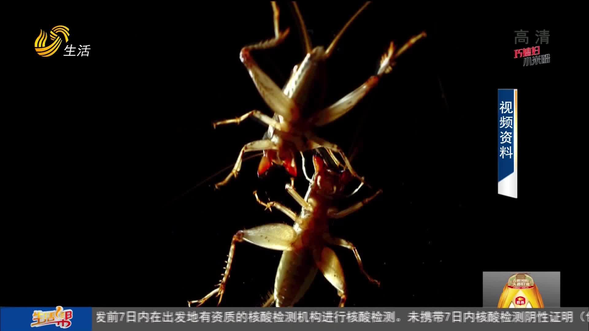 【就地过节去哪玩?】宁津德百杂技蟋蟀欢乐谷 大年初一试营业