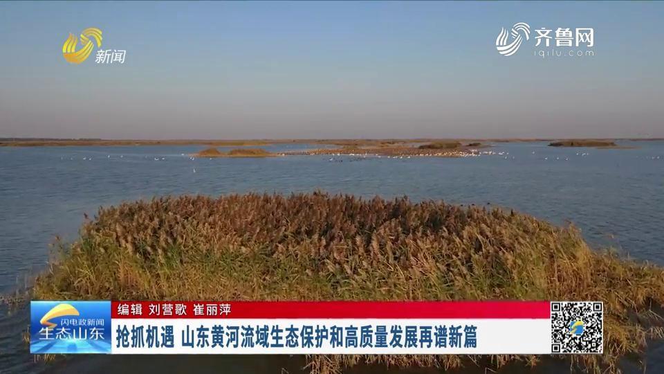 抢抓机遇 山东黄河流域生态保护和高质量发展再谱新篇