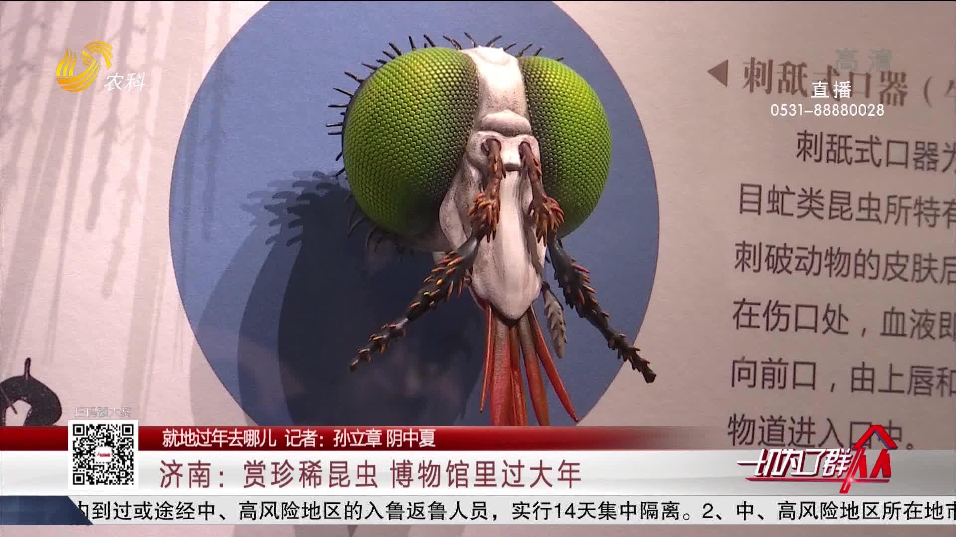 【就地过年去哪儿】济南:赏珍稀昆虫 博物馆里过大年