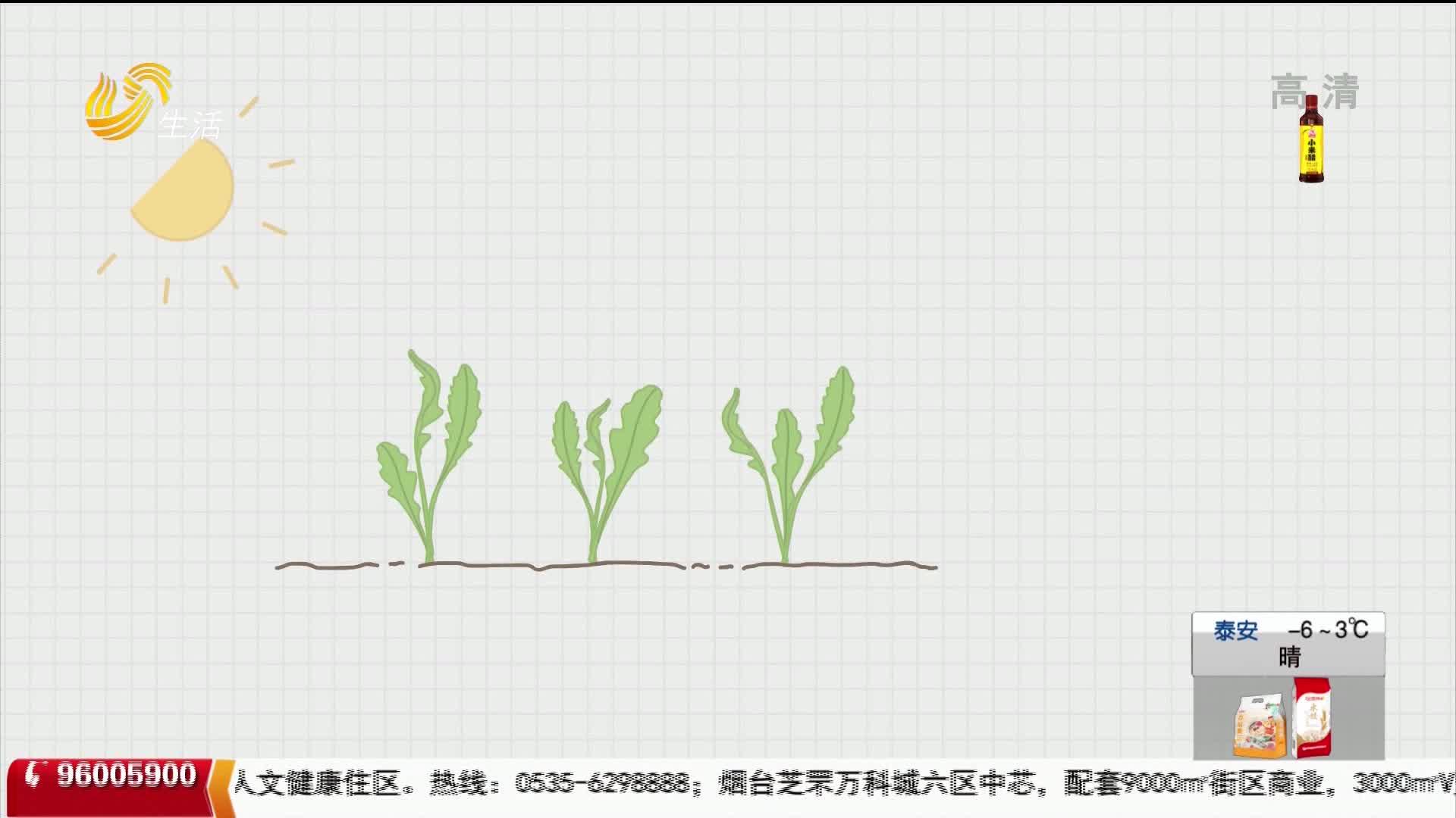 【食品有意思】野菜就是绿色食品吗?