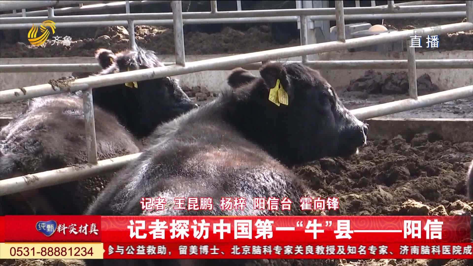 """牛年说牛:中国第一""""牛""""县阳信"""