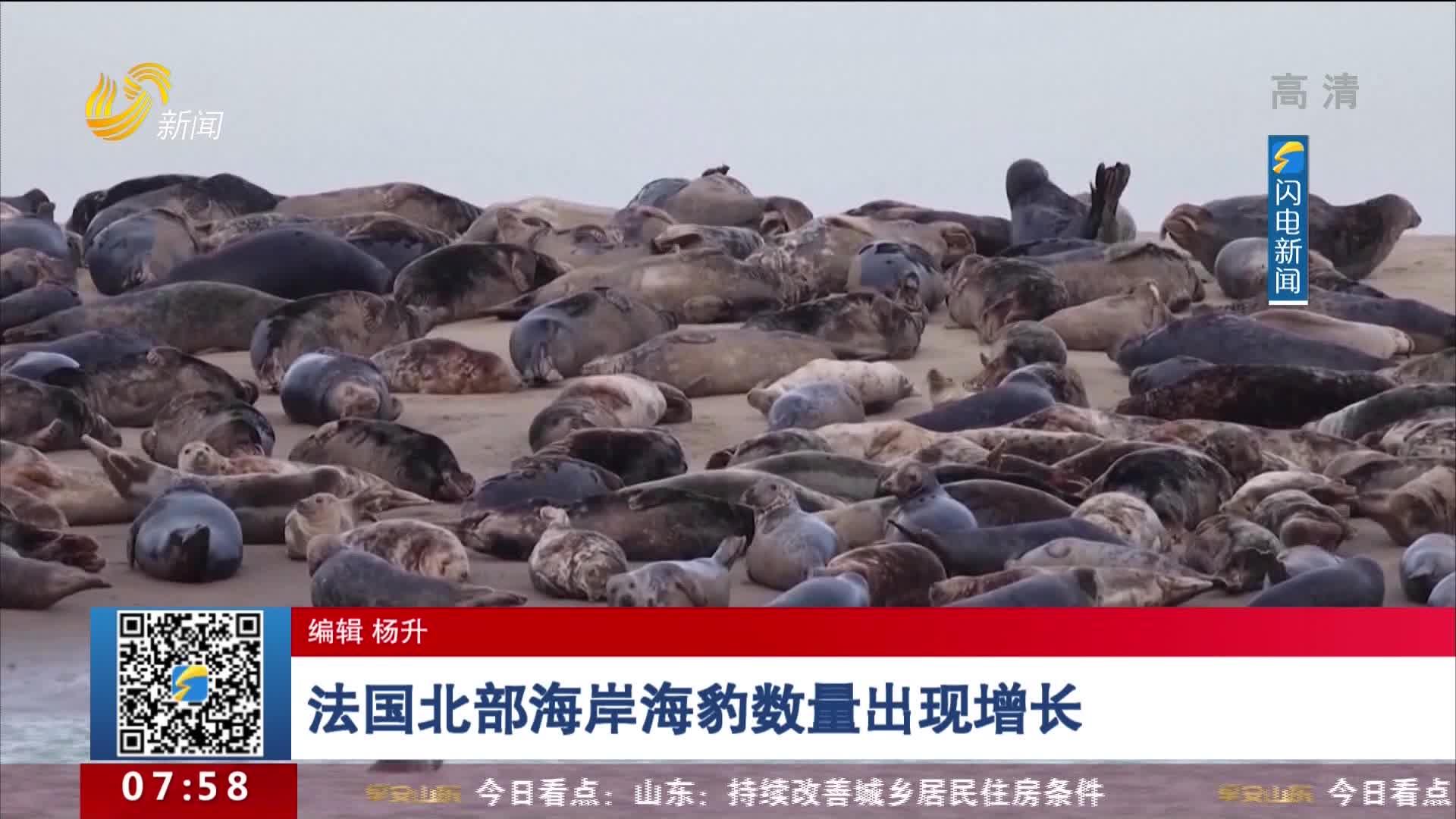 法国北部海岸海豹数量出现增长