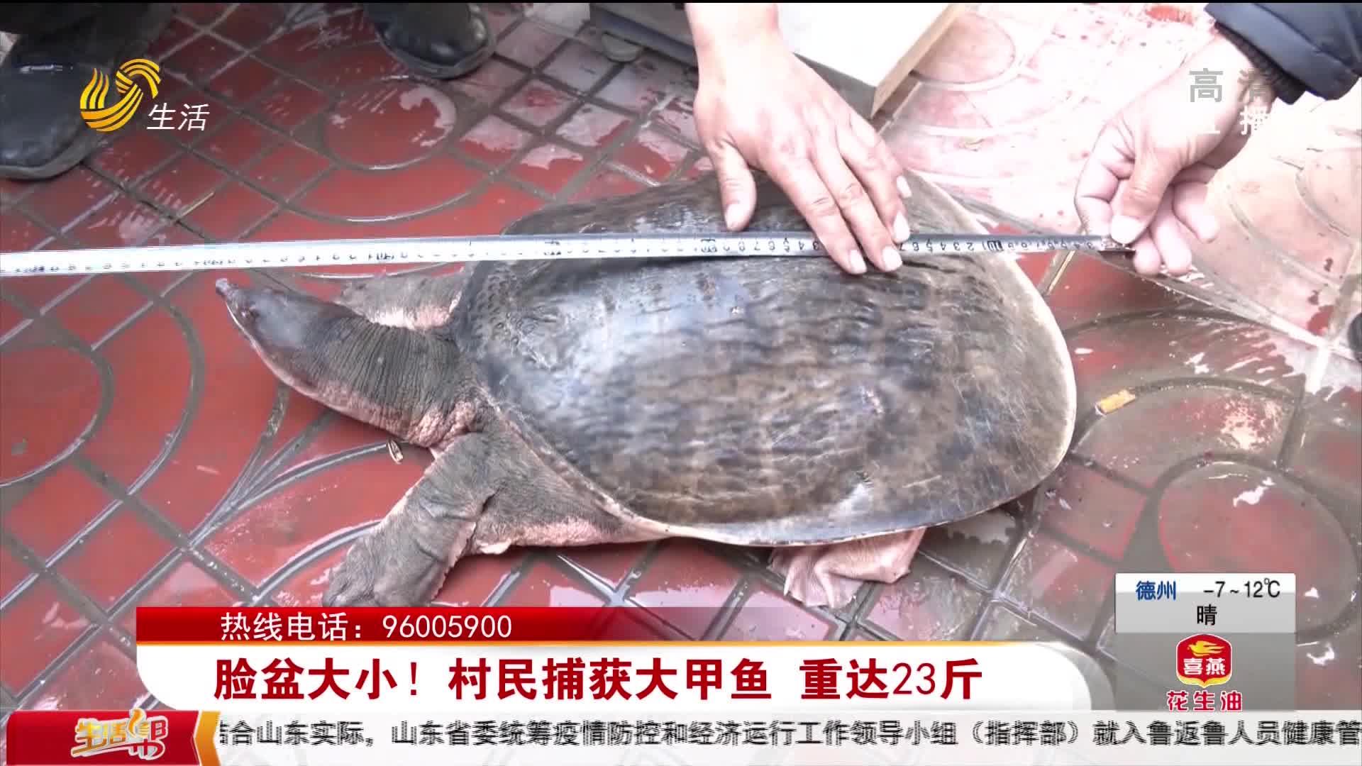 脸盆大小!村民捕获大甲鱼 重达23斤