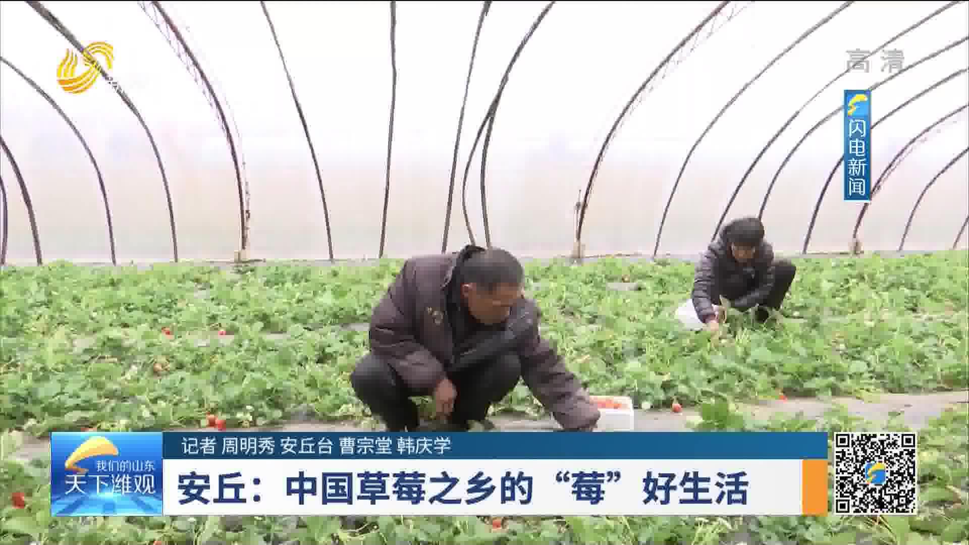 """【新春走基层】安丘:中国草莓之乡的""""莓""""好生活"""