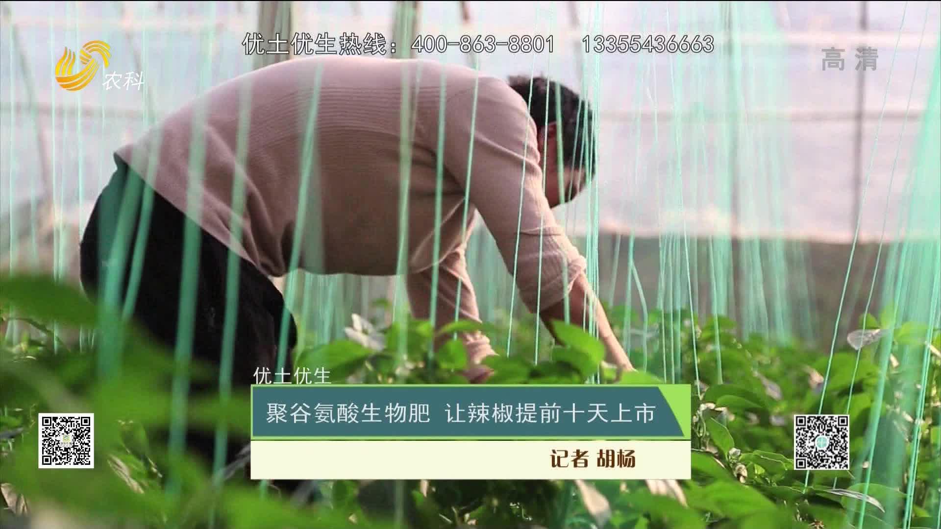 【优土优生】聚谷氨酸生物肥 让辣椒提前十天上市