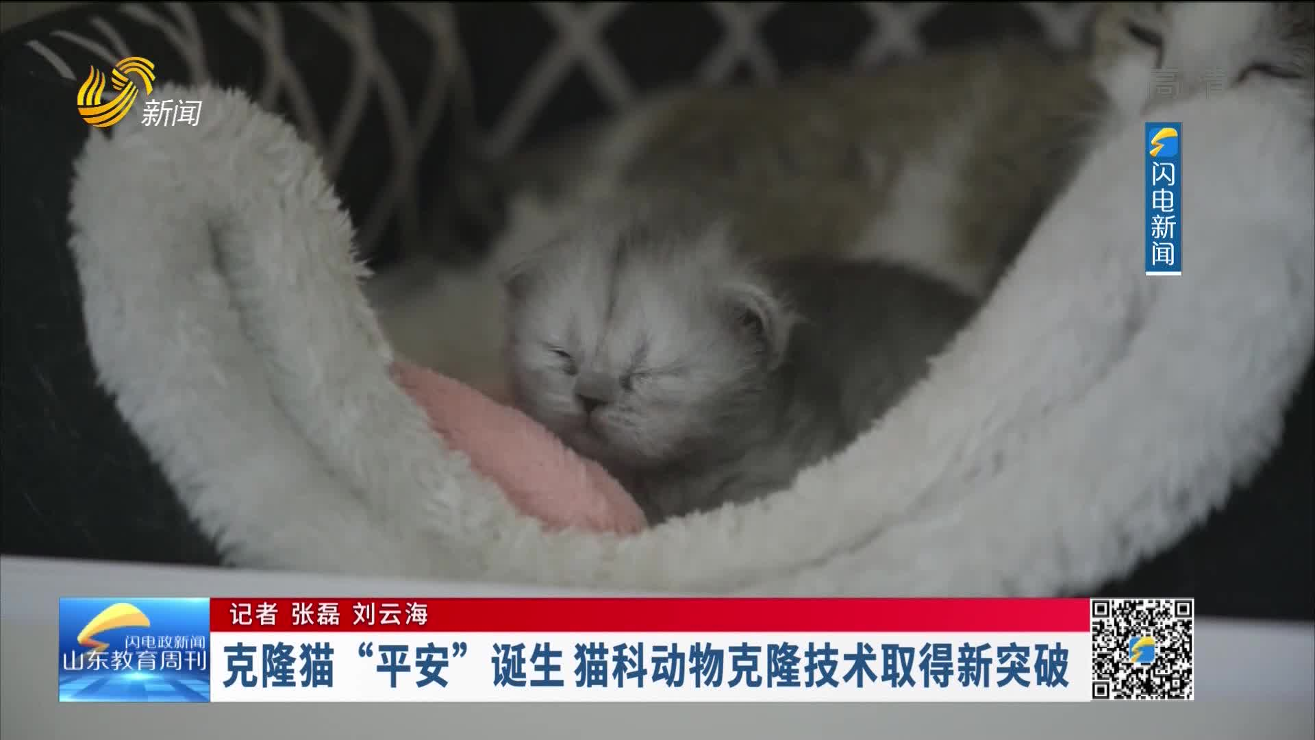 """克隆猫""""安然""""诞生 猫科动物克隆技术取得新突破"""