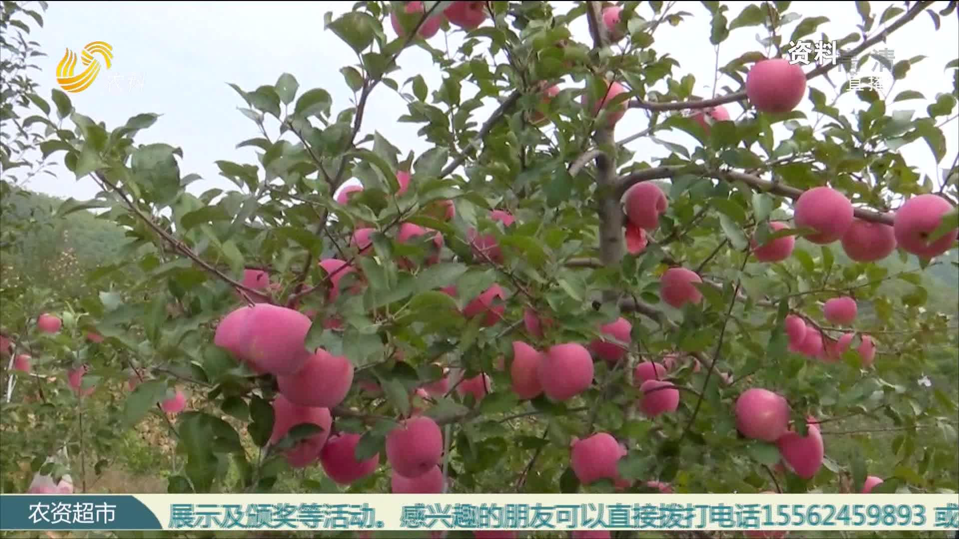 新建苹果园 模式该咋选