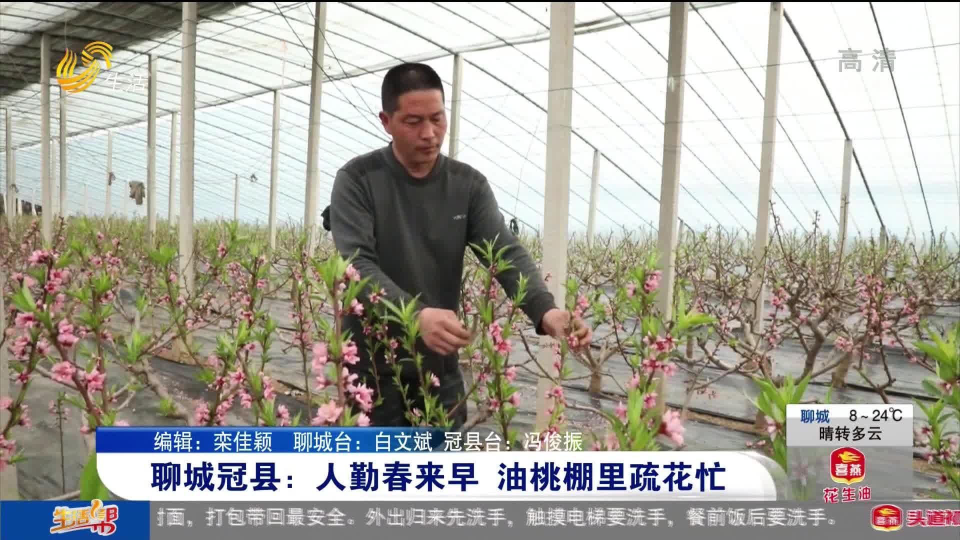聊城冠县:人勤春来早 油桃棚里疏花忙