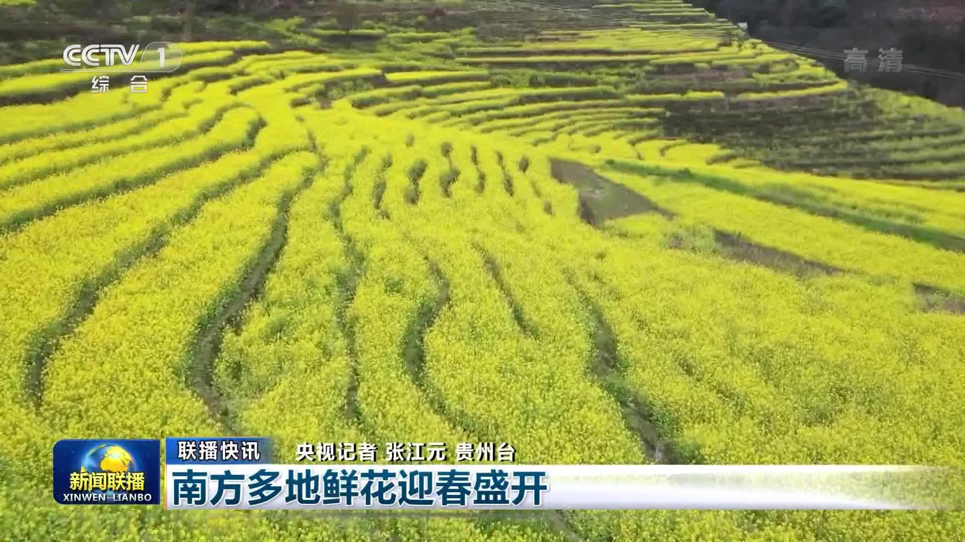 【联播快讯】南方多地鲜花迎春盛开