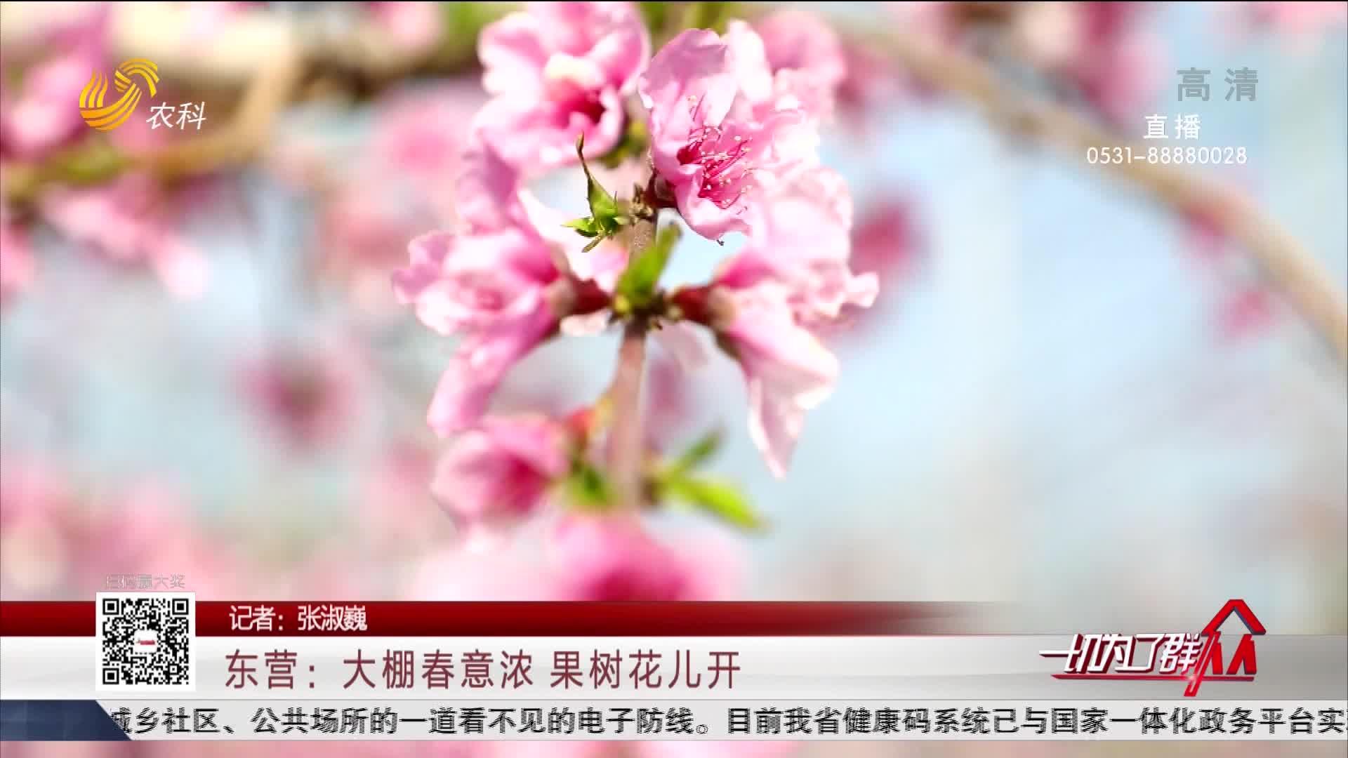 东营:大棚春意浓 果树花儿开