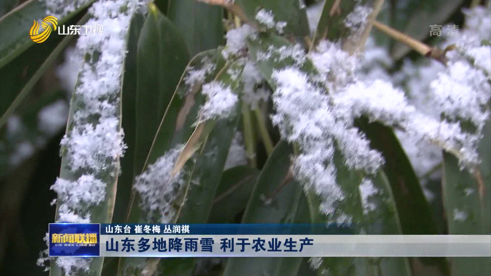 山东多地降雨雪 利于农业生产