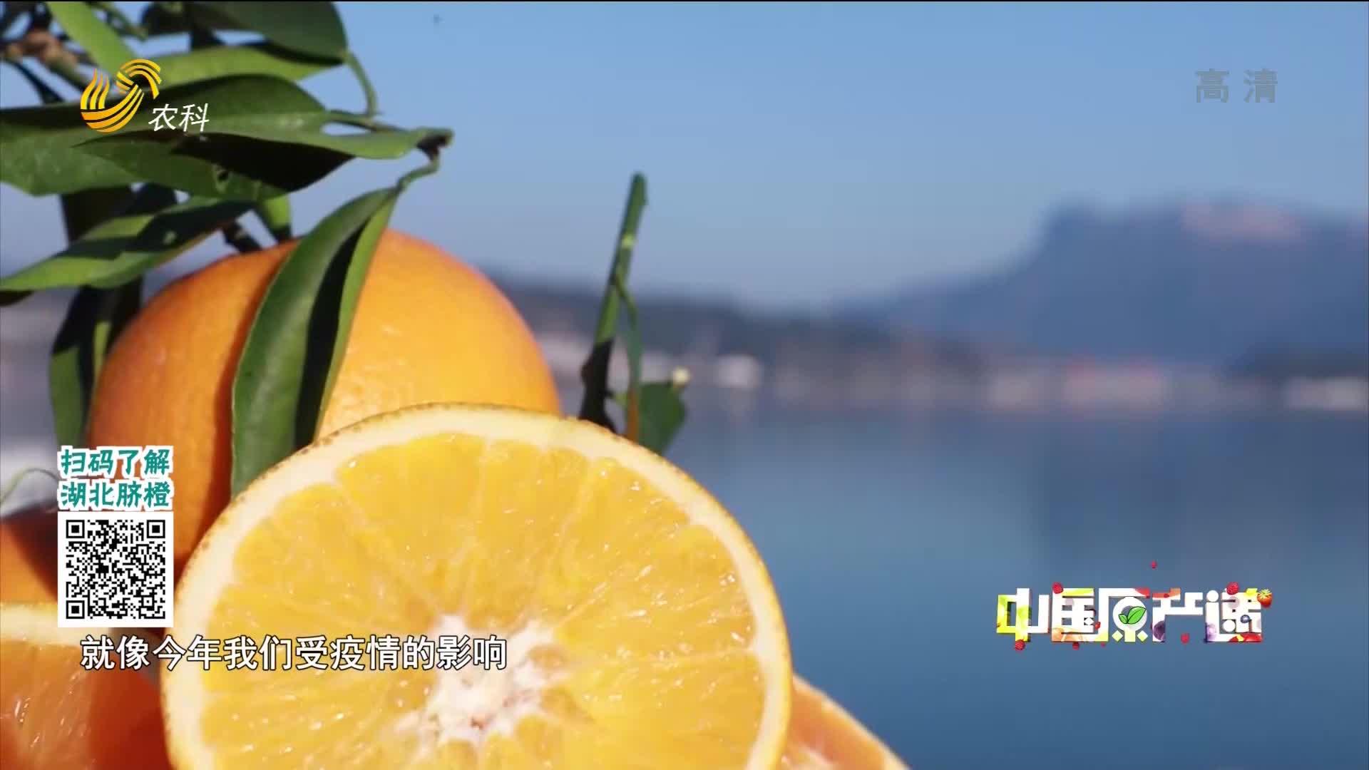 20210225《中国原产递》:秭归脐橙