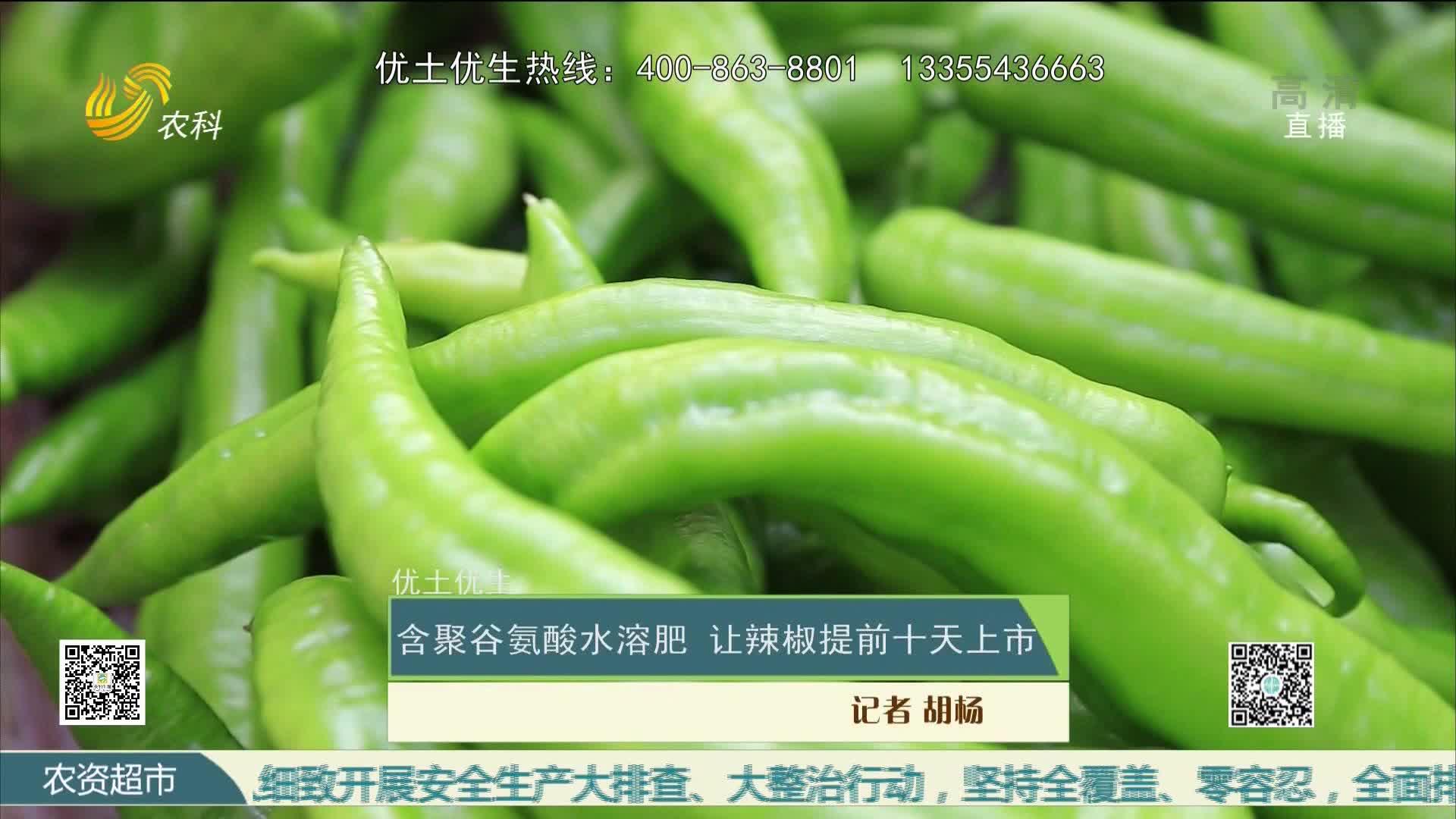 【优土优生】含聚谷氨酸水溶肥 让辣椒提前十天上市