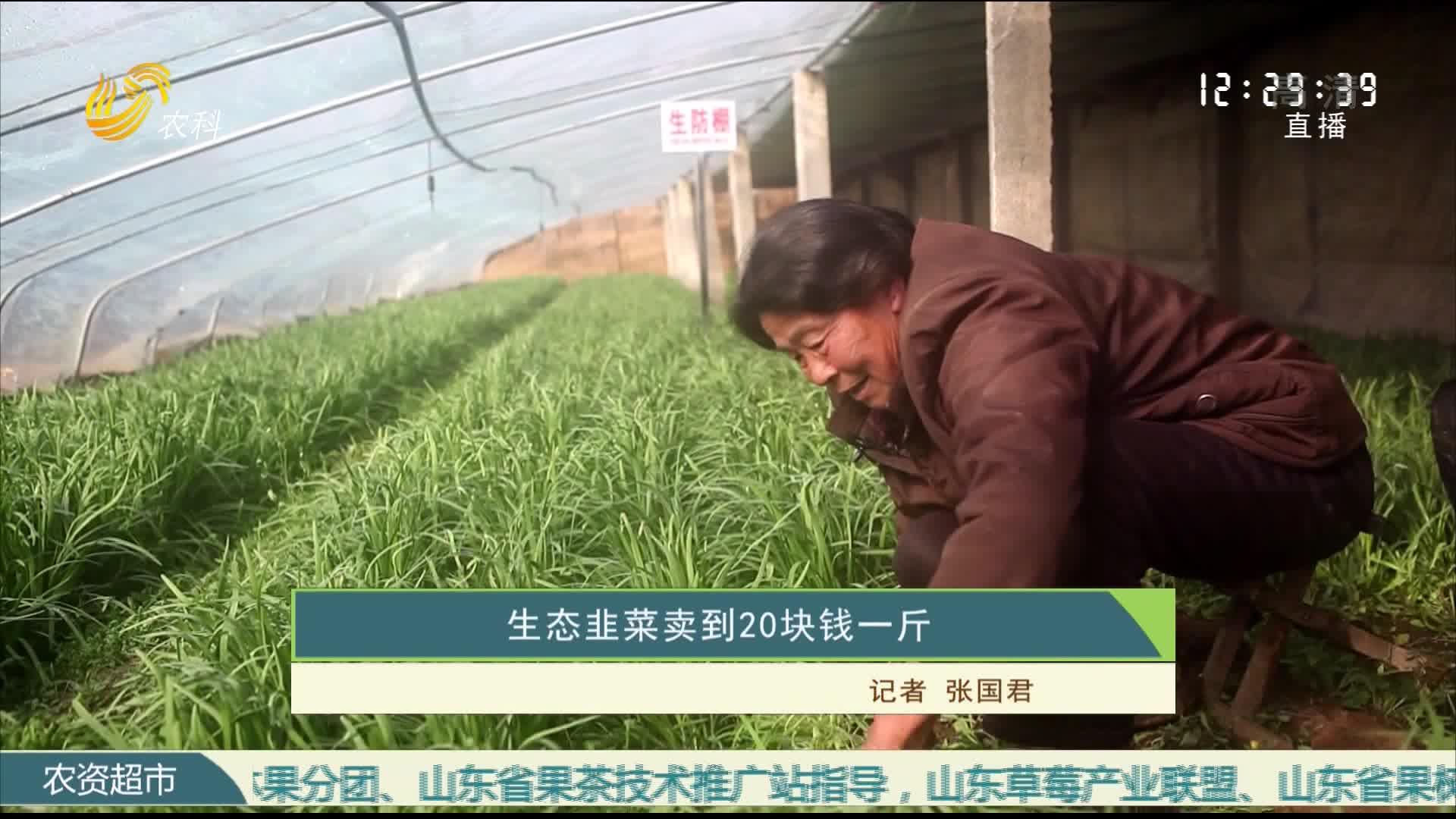 生态韭菜卖到20块钱一斤