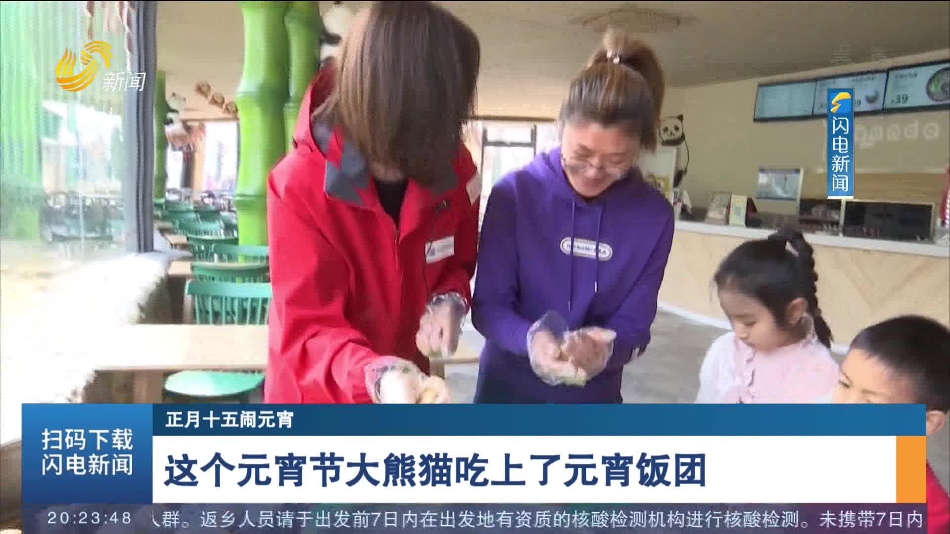 【正月十五闹元宵】这个元宵节大熊猫吃上了元宵饭团
