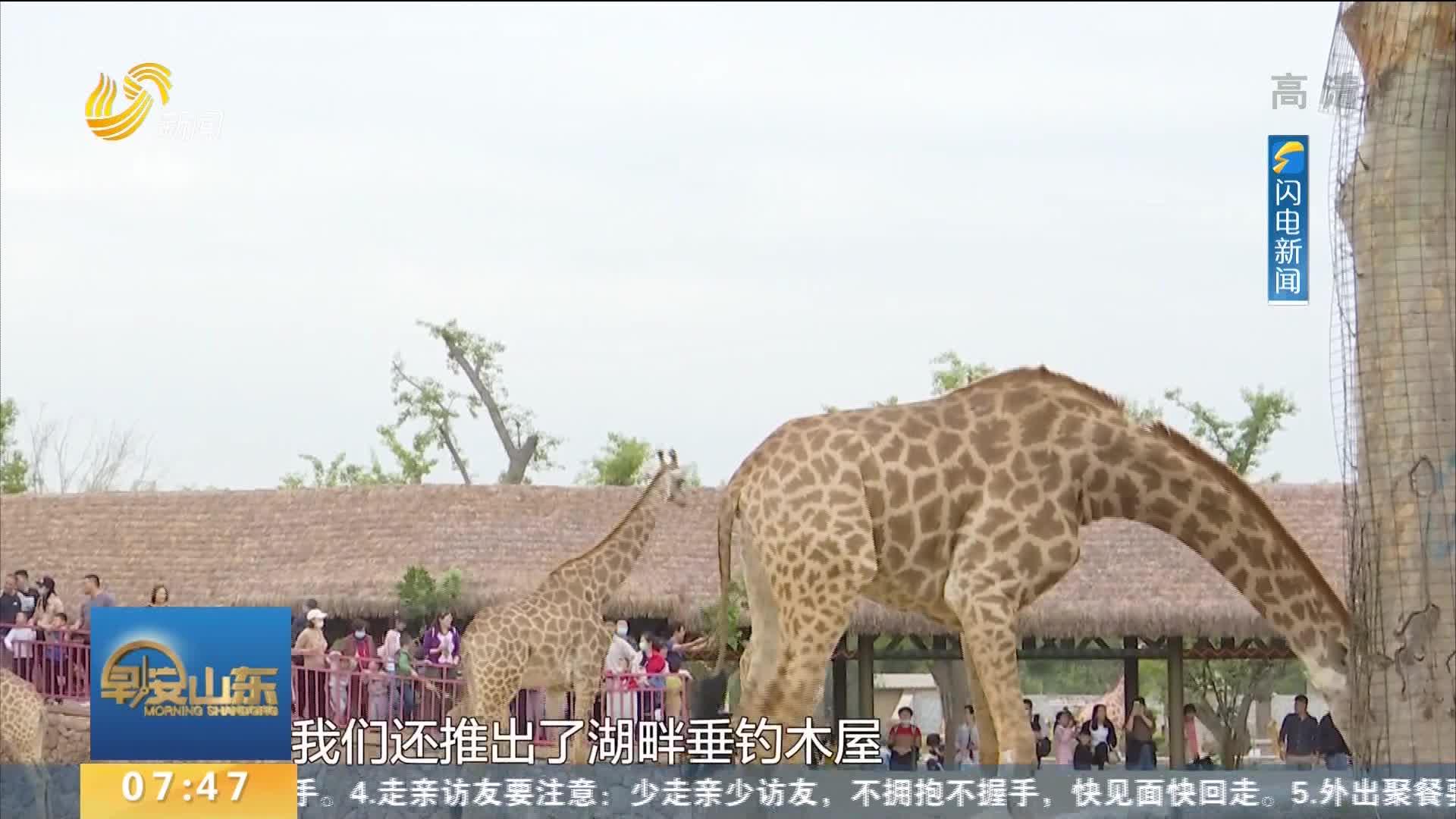 """熊猫有口福 记者现场制作""""元宵大餐""""共庆佳节"""