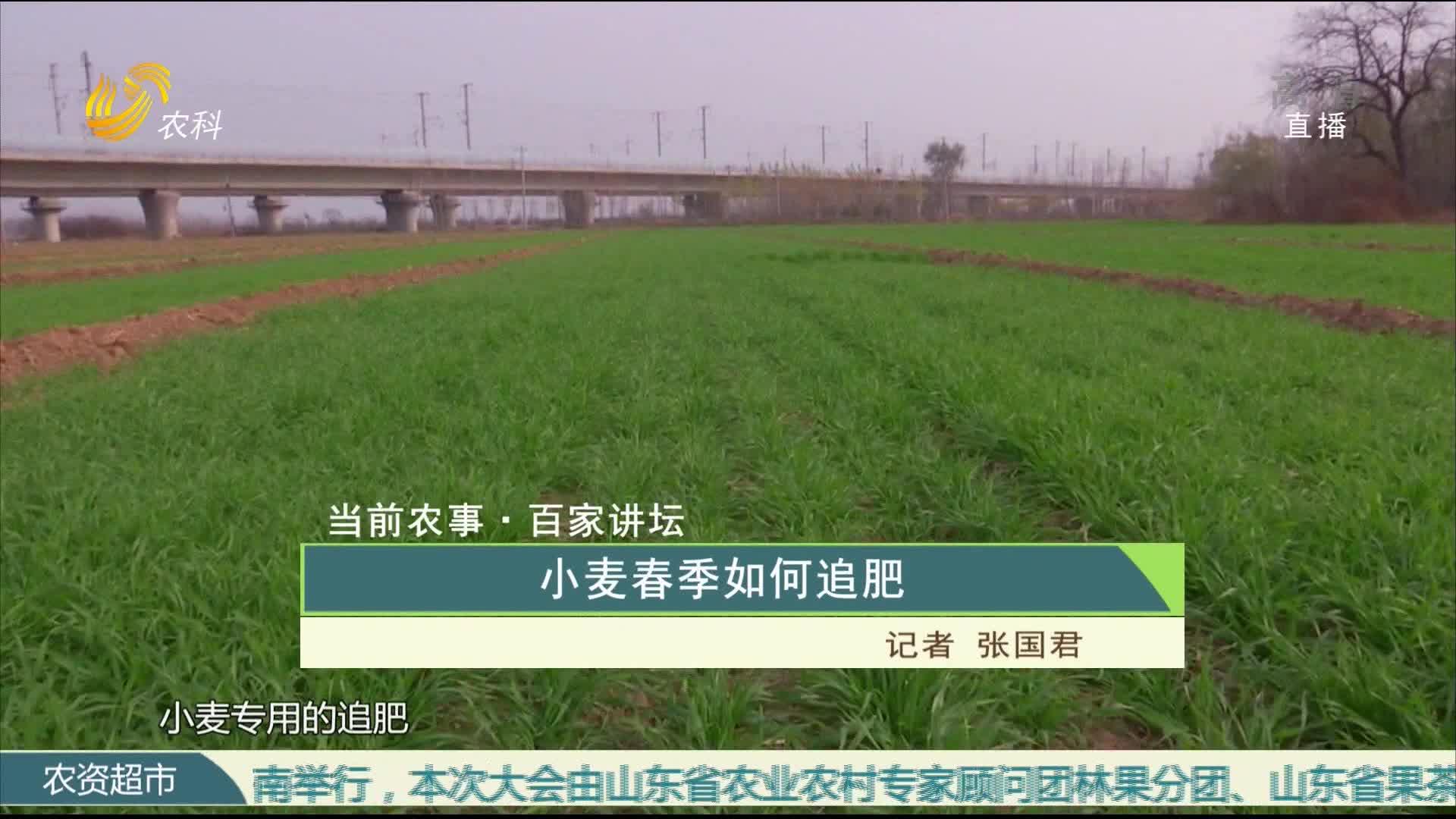 【当前农事·百家讲坛】小麦春季如何追肥
