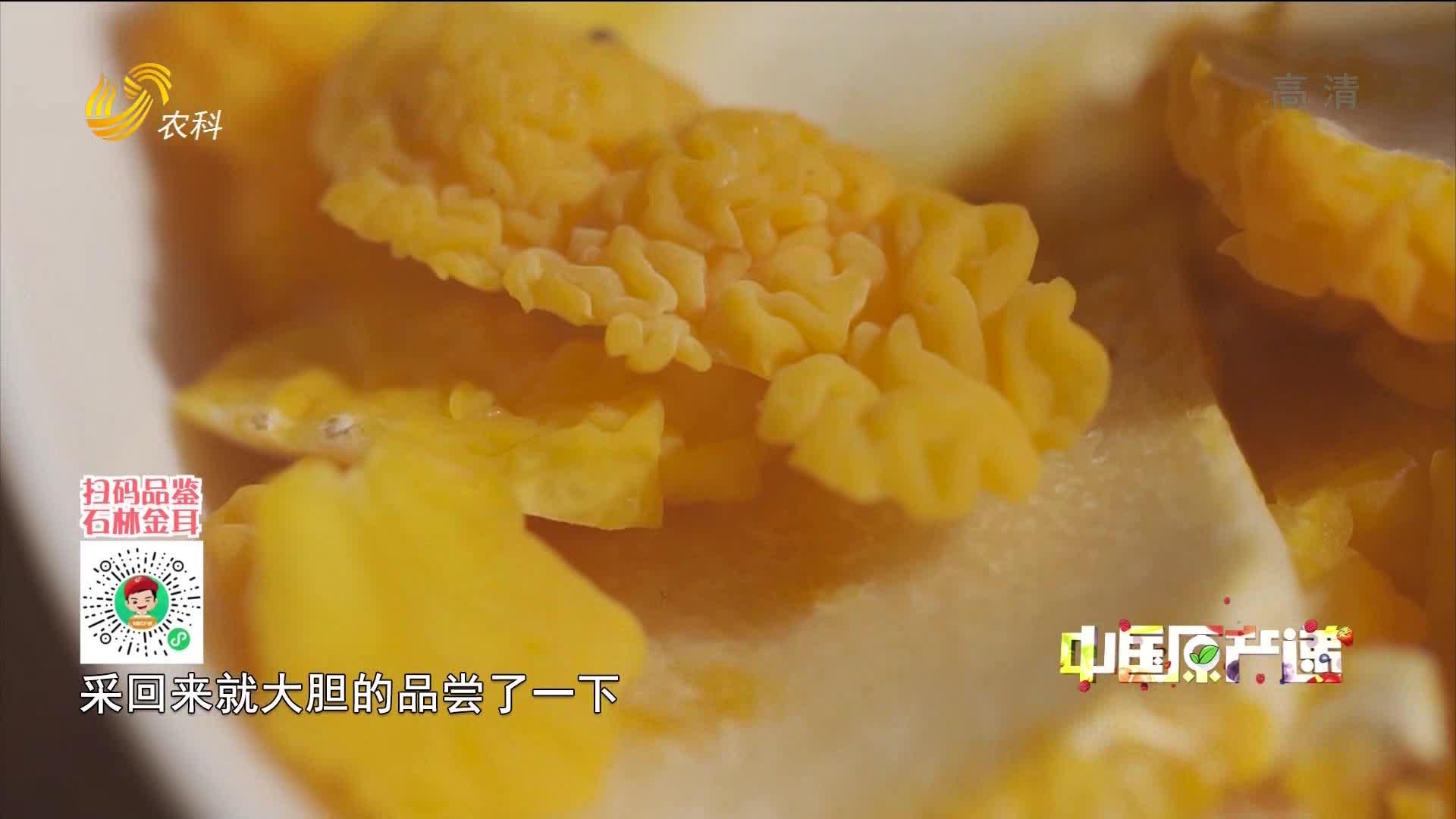 20210228《中国原产递》:石林金耳