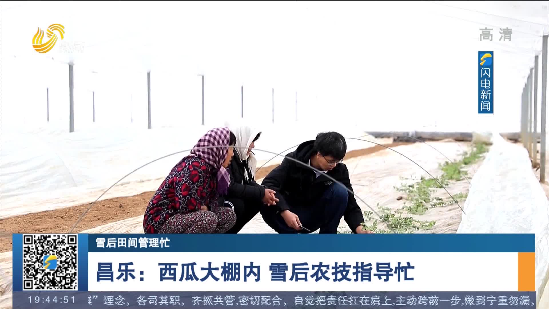 【雪后田间办理忙】昌乐:西瓜大棚内 雪后农技指导忙