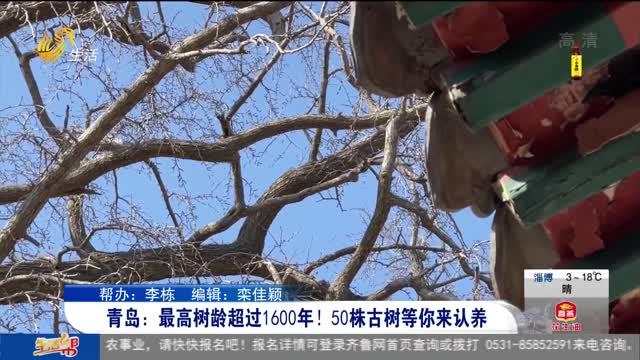 青岛:最高树龄超过1600年!50株古树等你来认养