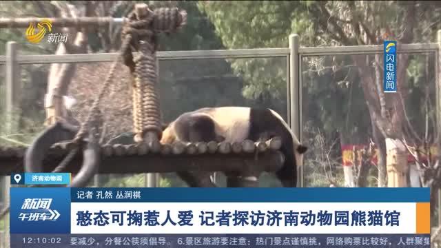 憨态可掬惹人爱 记者探访济南动物园熊猫馆