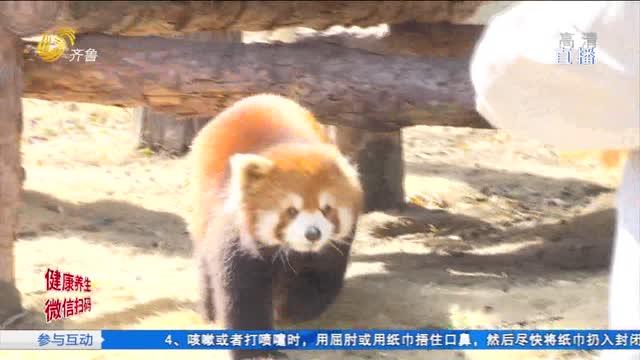 """六小熊猫组团出道 个个""""花名""""有说头"""