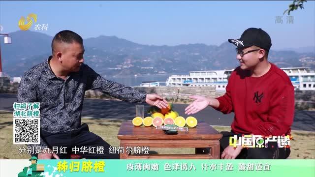 20210305《中国原产递》:秭归脐橙