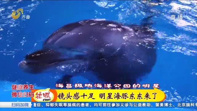 恶作剧走红网络!明星海豚东东的日常