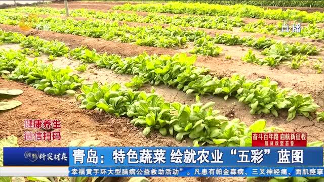 """青岛:特色蔬菜 绘就农业""""五彩""""蓝图"""