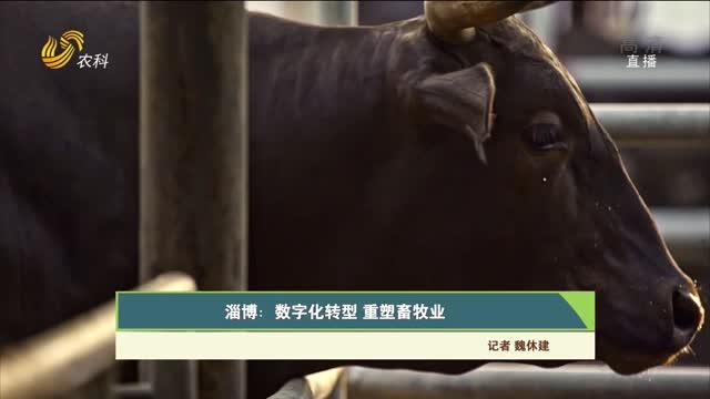 【齐鲁畜牧】淄博:数字化转型 重塑畜牧业
