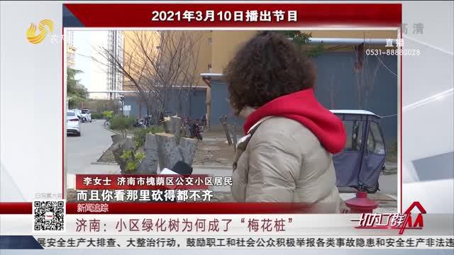 """【新闻追踪】济南:小区绿化树为何成了""""梅花桩"""""""