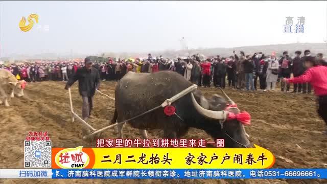 日照:二月二闹春牛 现场乐翻天