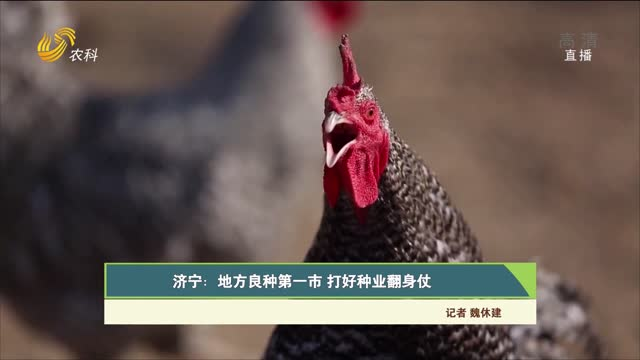 【齐鲁畜牧】济宁:地方良种第一市 打好种业翻身仗