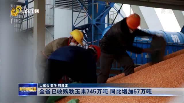 全省已收購秋玉米745萬噸(dun) 同比增加(jia)57萬噸(dun)