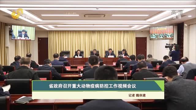 【齐鲁畜牧】省政府召开重大动物疫病防控工作视频会议