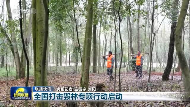 【联播快讯】全国打击毁林专项行动启动