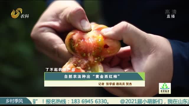 """【农大腐植酸《了不起的农产品》(四)】自然农法种出""""黄金西红柿"""""""