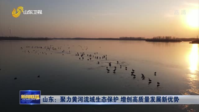 山东:聚力黄河流域生态保护 增创高质量发展新优势