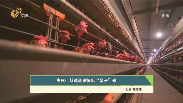"""【齐鲁畜牧】枣庄:从鸡蛋里炼出""""金子""""来"""